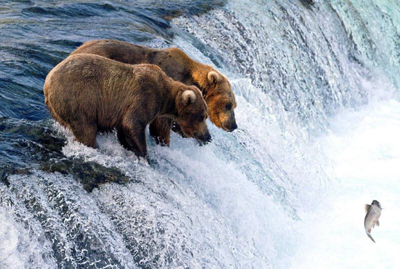 белый медведь все для рыбалки и охоты