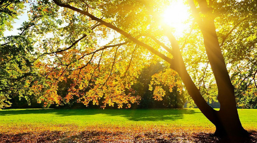 К СВЕДЕНИЮ Почему цвет солнца меняется?