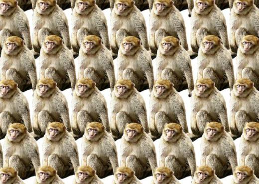 ПОЛЕЗНОЕ: Четвертая обезьяна тра та та парарарам